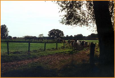 Fotoalbum-Minicamping-de-Dinkelweide-001